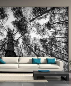 Fototapeta drzewa w lesie