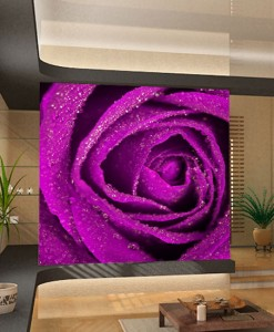 Fototapeta róża w różu