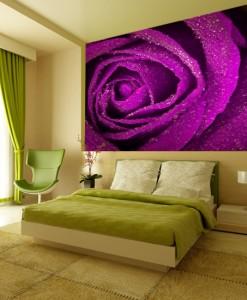 Foto-tapeta pąk amarantowej róży