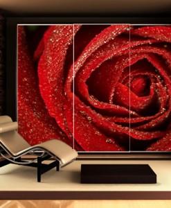 Fototapeta czerwona róża z rosą
