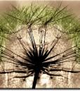 Foto-tapeta z zielonym dmuchawcem