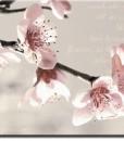 Tapeta kwitnąca jabłoń