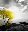 Tapeta samotne drzewo