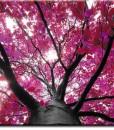 Tapeta pod różowym drzewem