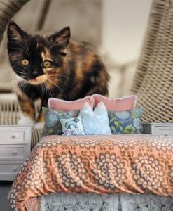 Foto-tapeta z kociakiem