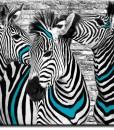 Tapeta zebry w turkusie na białej cegle