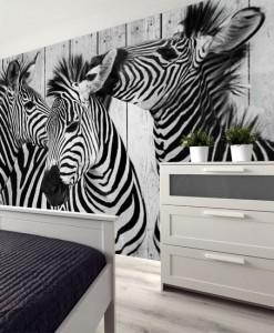 Fototapeta zebry na tle desek