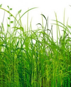 fototapety łąki i polany