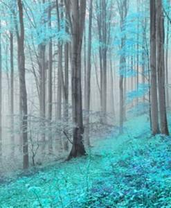 Fototapety drzewa i lasy