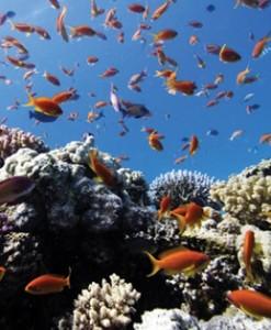 fototapety pod wodą i nad wodą