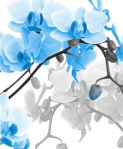 fototapety storczyki i orchidee