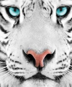 Fototapety ze zwierzętami