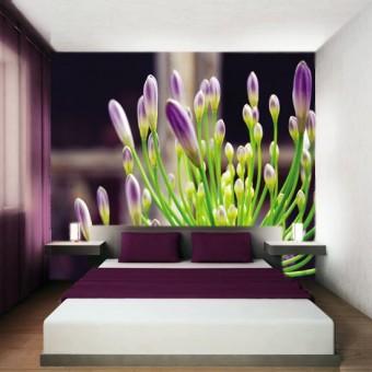 fototapeta pączki kwiatów