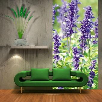 fototapeta łaka kwiaty lawendy