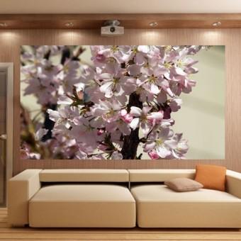 fototapeta ogrod kwiaty wiśni