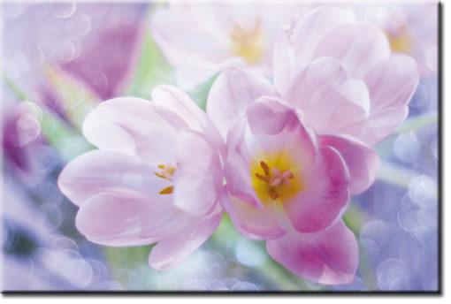tapeta z tulipanami