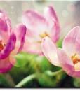 tapety z tulipanami