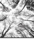 tapety z drzewami