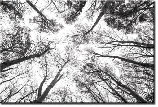 drzewa na tapecie