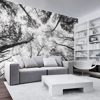 fototapety z drzewami