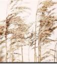 tapety z łąką