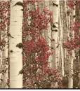 tapety z brzozami w sepii