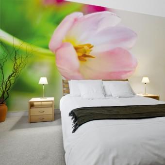 Fototapety z tulipanami na ścianę