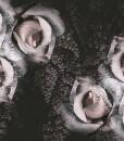 tapeta ścienna z rożami