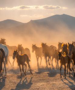 Fototapeta zachód słońca i konie