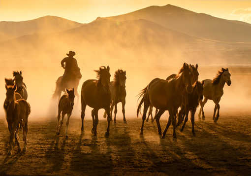Fototapeta z motywem kowboja i koni