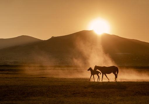 Tapeta w sepii z motywem koni
