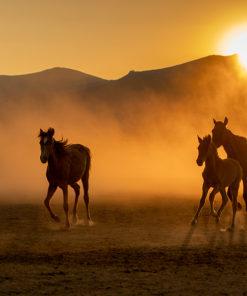 Tapeta konie i góry