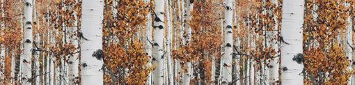Fototapeta kuchenna jesienne drzewa
