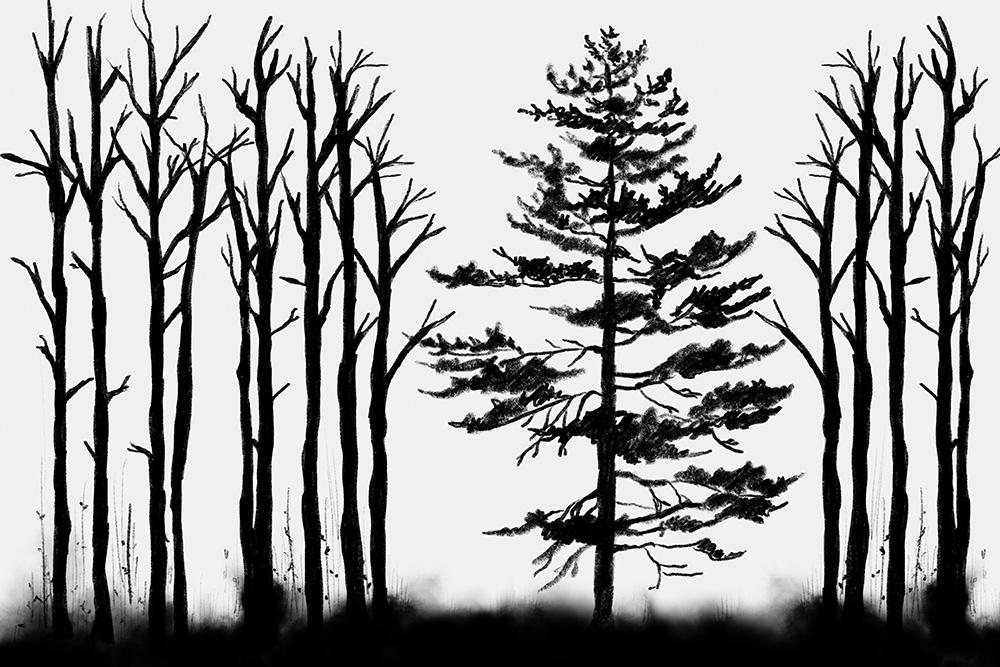 fototapeta z motywem lasu