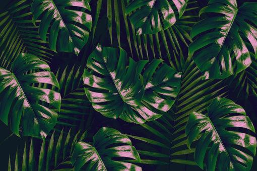 tapeta z dużymi liśćmi