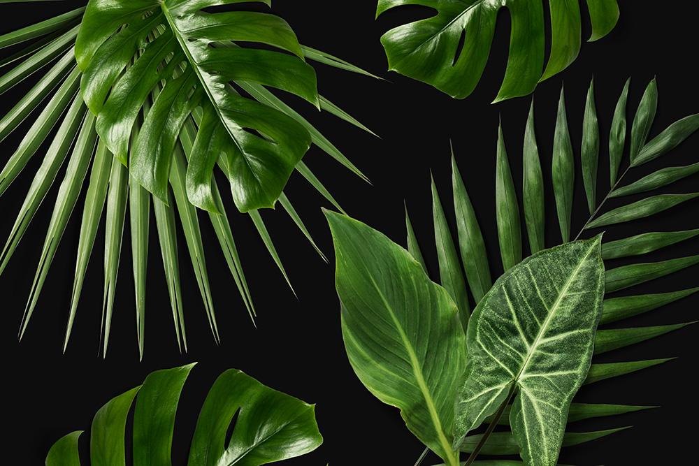 fototapeta w tropikalne liście