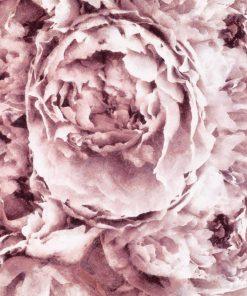 Botaniczna tapeta - Piwonie