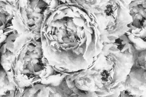 Szara fototapeta z kwiatami