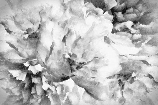 Fototapeta z motywem szarych kwiatów